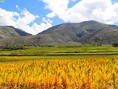 170824 Damxung 22 (Brilliant Bry *) Tags: lhasa damxung namco namtso tibet china2017
