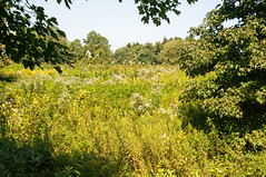 Terrapin Nature Area, Stevensville MD 11 (Larry Miller) Tags: naturepark conservation chesapeakebay maryland 2017