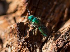 255/365: The Green Hornet