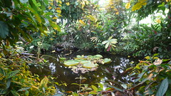 Le Havre - Les jardins suspendus (jeanlouisallix) Tags: le havre haute normandie saint adresse fort de jardin parc park garden serre tropicale paysages nature plantes botanique randonnée fleurs flowers