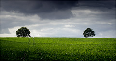 Come on over (Beppe Rijs) Tags: deutschland germany schleswigholstein schlei wolken wolkendecke landschaft landscape natur nature field feld gras baum tree horizont horizon grün green clouds farbig colored line rural ländlich pastell fertile fruchtbar freshly color farbe acker