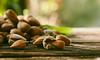 Almonds (Inka56) Tags: hbw 7dwf closeup almond woodtable nuts macroorcloseup bokeh backlight