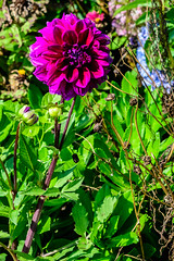 MarthasVineyard_757 (Lance Rogers) Tags: camera flowers marthasvineyard2017 massachusetts nikond500 oakbluffs people places lancerogersphotoscom ©lancerogers