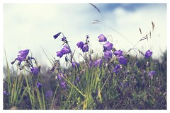 Wild flowers.... (JiJaRo) Tags: flowers canon trip austria tyrol wildflowers bokeh