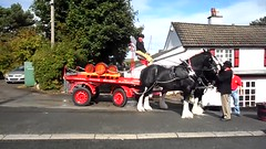 Shire Horses publicity stunt (Marty's White Suit) Tags: animals horses exteriors flintshire uk outdoors people rural