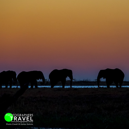 Elephants at sunset - Chobe 2014