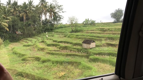 The famous rice terraces of Bali from the car en route to Lovina