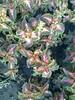 Fotografie38931 (chicore2011) Tags: municipal floweres