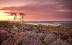 Together In Heather (Captain Nikon) Tags: couple together youngtrees heather dawn sunrise surpriseview hathersagemoor hathersage peakdistrict derbyshire mist misty boulders rocks imagination morninglight england greatbritain uk purple wildflower