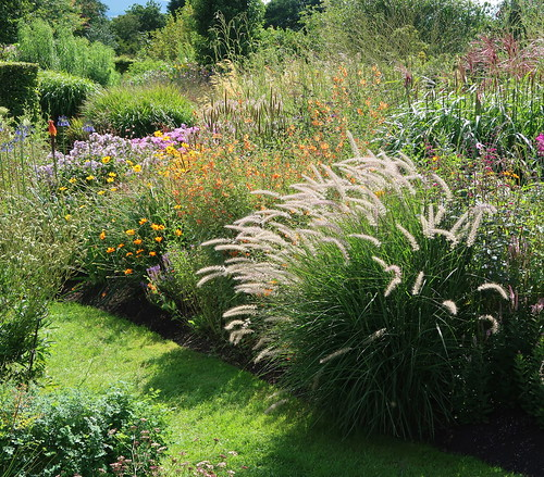 Pennisetum in a lovely mixed border