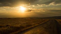 Anatolian Grassland.. (Ext-Or) Tags: sunet sun light flickr flickrturkey nikon d5200 nikond5200anatolia sunlight landscape nature road clouds dramatic dramaticclouds orange fields golden sheeps herd flocks rays sunrays grassland anatoliangrassland ismailcantüfekci