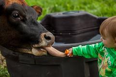 Food (Lebemitgott) Tags: kreative fotografie photoshop fotograf 500px boy мальчик швейцария деревня food корова farmer schweiz essen junge kuh karotte möhre homburg schwitz