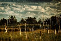 skeletons in the marsh (tom bourdot) Tags: hss sliderssunday