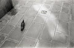 img002 (Yu,Tsai) Tags: leica m2 leicam2 film kodaktrix400 iso400 gtx970 bw モノクロ italy italia venizia イタリア 法國學料理那十個月 leitz summilux114352st 35mm