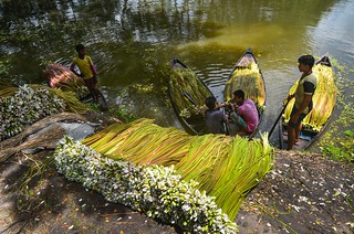 Water lily market