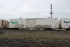 Achoo, Devn, Deka (NJphotograffer) Tags: graffiti graff trackside track railroad rail art freight train bench benching reefer refrigerated car tropicana achoo devn deka