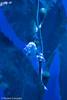 IMG_0639 (10Rosso) Tags: acqua acquario genova pesci pesce mare acquariodigenova aquarium genovaacquarium