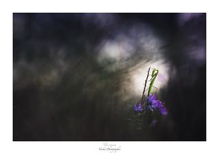 Jardin secret d'un poète