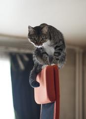 Avignon (lauriepetsitterparis) Tags: chatte chat mignon miaou minou catsitter cat petsitter