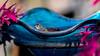 BNP_1559LRLR (MartinGene) Tags: frog blue bowl blacknorthpictures martin gira nikon
