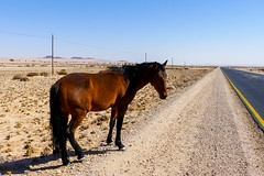 P1030019 (Seb_Jan) Tags: namibie namibia afrique africa afrika summer 2017 road trip roadtrip travel adventure holiday nature explore lumix wildlife safari picoftheday photooftheday dune desert naukluft namib wild horses chevaux sauvages aus