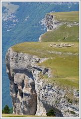 Herd (hjhoeber2) Tags: sonnart18135 sonnar za zeiss sony a6000 sonyilce sonyalpha sonyalphaa6000 france drôme frankreich herde herd sheep sheepherd vercors