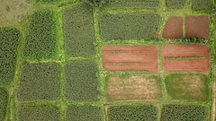 Mosaic of Maize fields near Hassan (SaiKiranKanuri) Tags: anniganahalli karnataka india in maize fields drone mavic rain monsoon earth farming