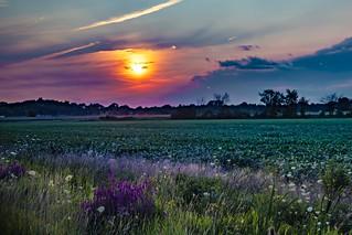 Sunset farm field