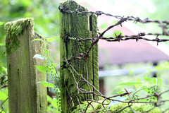 Safety (siebensprung) Tags: safety sicherheit fence zaun stacheldraht barbedwire nettles brennnesseln garden garten wild wilderness wildnis