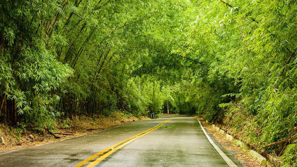 Resultado de imagem para Imagens do tunel de bambu em Meruoca