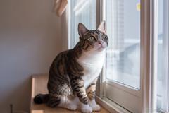 _DSC3035 (catfish.boogie) Tags: nikond750 tamronsp35mmf18divcusd japan hokkaido cat