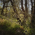 Walk in the Woods 1 thumbnail