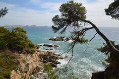 Calonge (RarOiseau) Tags: plage rocher escalier mer calonge espagne catalogne arbre saariysqualitypictures v2000