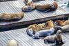 Pier 39 Sea Lion (Jemlnlx) Tags: canon eos 5d mark iv 4 5div 5d4 san francisco ca california ef 70200mm f4 is usm l pier 39 fisherman fishermans wharf seal seals lions lion dock attraction tourists sea