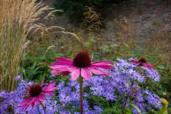 Walled Garden, Thurnham (paul_taberner_photography) Tags: lancashire thurnham flowercloseups