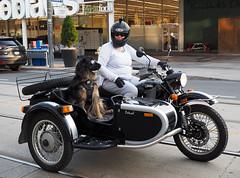 Sidecar Snoopy (jeffcbowen) Tags: dog sidecar goggles glasses toronto