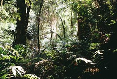 (homesickATLien) Tags: 35mm film kodak art analog expired olympus mjuiii nature outdoor wanderlust green forest landscape travel mountain warburton mount dandenong plant backpacking backpacker explore expression mindfulness ambience peace breath oxygen harmony realm wild wilderness environment earth path trail therapy therapuetic organic australia victoria melbourne freedom gippsland growth life verve exposure hike movement motion
