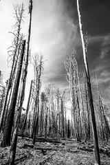 Hannagan Meadows (kevin dooley) Tags: hannagan meadows apache sitgreaves az arizona