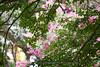 _DSC8150 (vhbin) Tags: 담양군 전라남도 대한민국 a99ii a99m2 명옥헌 담양출사지 담양 배롱나무 백일홍 꽃사진 연꽃 해바라기