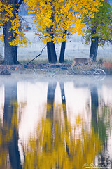 Out For A Stroll (rosacruzjl) Tags: autumn colorado fall lakeladora rockymountainarsenalnwr atmosphere beautiful buck color colorful deer denver fog forest landscape mountain nature outdoors pretty reflection romance romantic scenery scenic tree weather