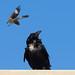 Specter of a Mockingbird