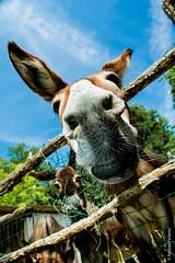 hi-ho (Andrea_Federici) Tags: andreafederici asino canoneos50d ass baudet animale cielo baffi orecchie muso