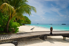 Malediven Reethi Beach (alexanderwieser50) Tags: besttime adventure travel sunny days maledives white sand holiday sea blue bird paradise island sky reisen baa atol summertime