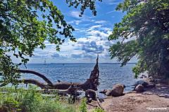 Am Bodden (garzer06) Tags: wolken bodden deutschland himmel vorpommernrügen blau wasser ostsee baum grün steine naturphoto landschaft naturfoto landschaftsbild mecklenburgvorpommern landschaftsfoto vorpommern segelboot wellen sand landscapephoto inselrügen landscapephotography insel landschaftsfotografie rügen