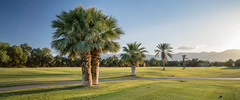 Furnace Creek Golf Course (Silver2Silicon) Tags: batis zeiss zeissbatis batis2818 sony sonya7rii deathvalley furnacecreek golf golfcourse palmtrees