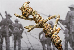 Macro Mondays – Over The Top (Kev Gregory (General)) Tags: macromondays rust small piece barbed wire field la boisselle france hundred years old signs stood test time poignant reminder brutality futility first world war probable relic german fortification schwabenhöhe front line south village somme area fiercely contested synonymous site lochnager crater created mine detonated day battle 1st july 1916 england kev gregory canon 7d macro mondays 100 100mm f28 usm ef challenge theme