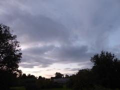 Trees at dusk (seikinsou) Tags: ireland westmeath autumn dusk sky cloud tree