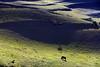 Terraces (MelindaChan ^..^) Tags: rapeseed flower wheat field 油菜花麥田 flowers wheatfield 油菜花 麥田 plant agriculture plantation blue sky cloud mountain 祈連山