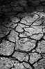 Cracks (Benedict Todd) Tags: id11 bw olympus hp5 om4 800 earth cracks shadows ilford dry soil
