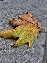 Autumn has come! (mustafaemek) Tags: outdoor natgeotravel natgeo naturephotographer naturephoto mobilephoto mobilephotography mobile iphone6 apple iphonephotography iphoneonly iphone photographer perfectphotographer perfect autumn nature
